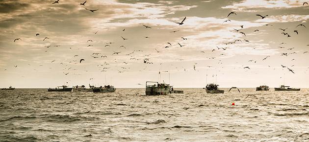 The tuna fleet gathers