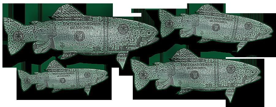 lake miramar trout