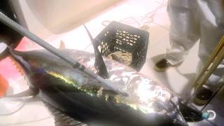 Discovery Channel Fighting Tuna