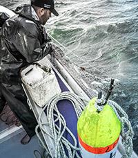 herring nets