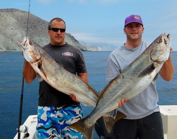 white_sea_bass caught