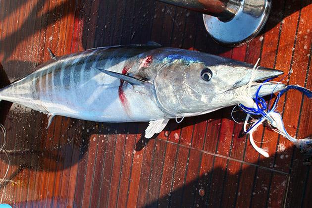 bait rigging