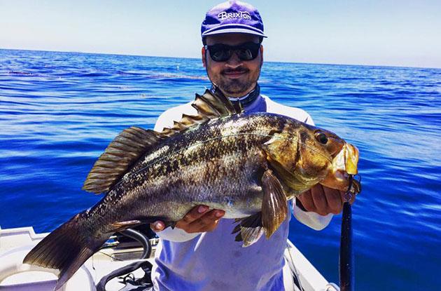 Tuna bite but yellowtail dominate counts for Santa barbara fishing charters
