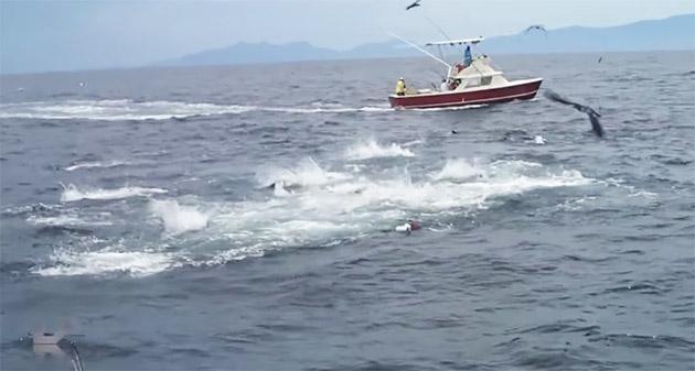 Underwater Tuna Frenzy