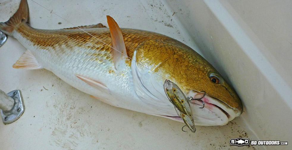 Buras Marsh Media Bash At Cajun Fishing Adventures Bd