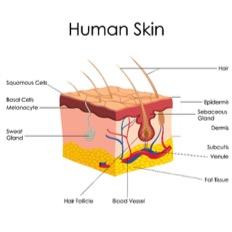 Human skin cancer