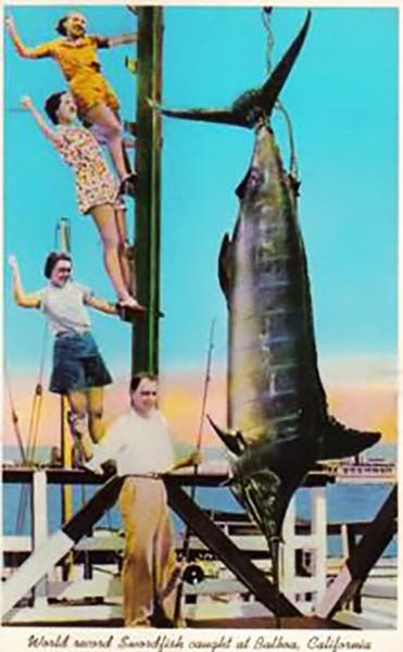billfish history