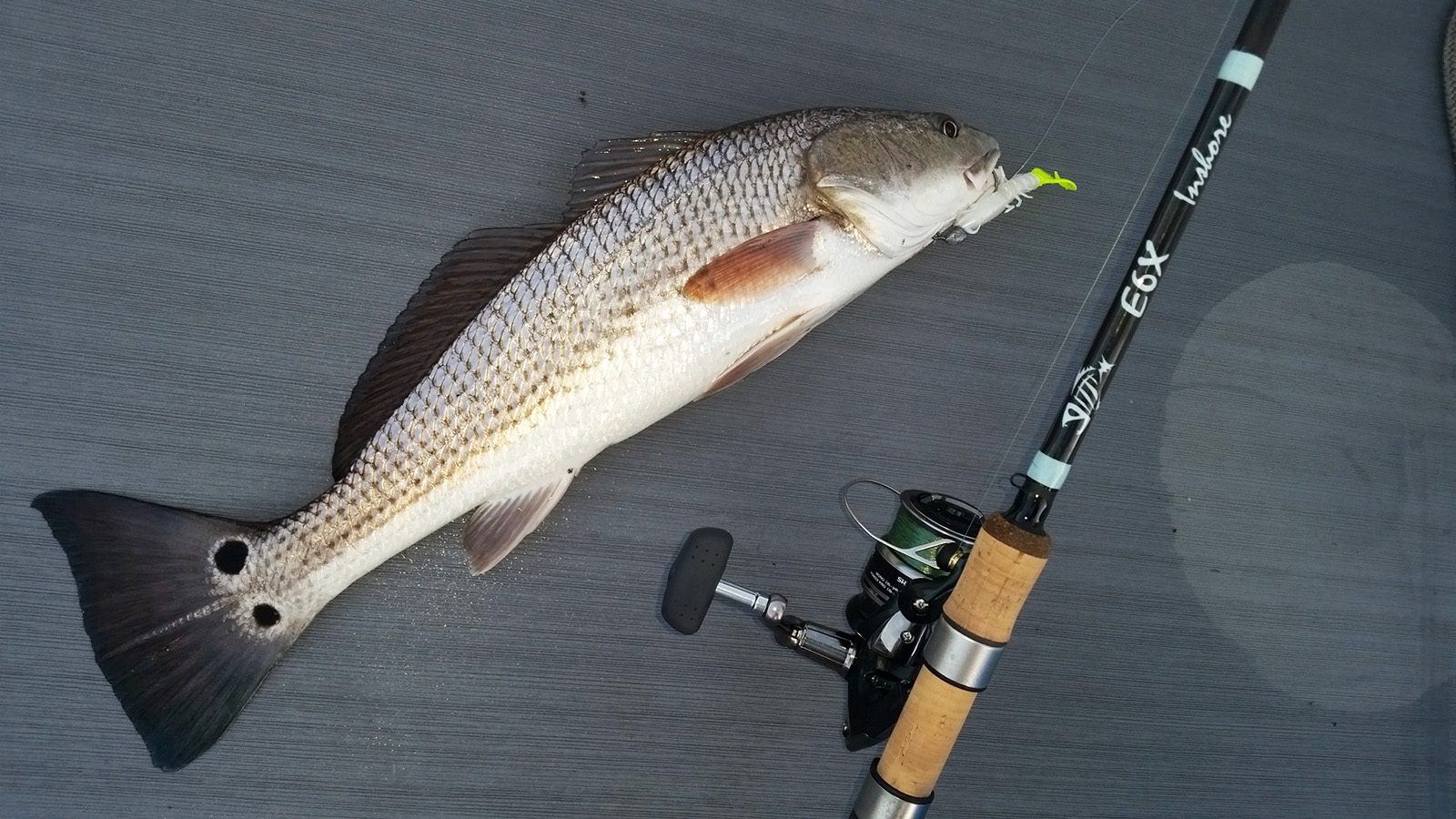 Performance Testing The G Loomis E6x Inshore Rod Bd