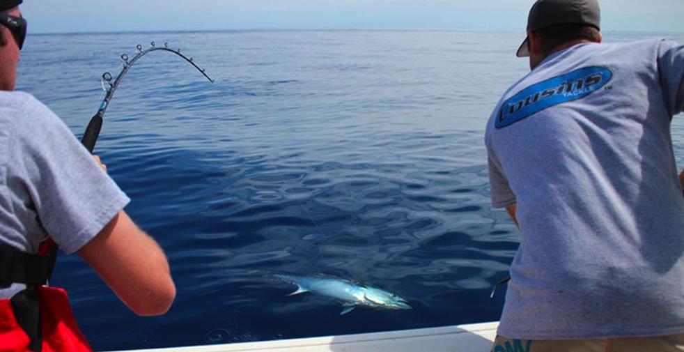 gaffing tuna