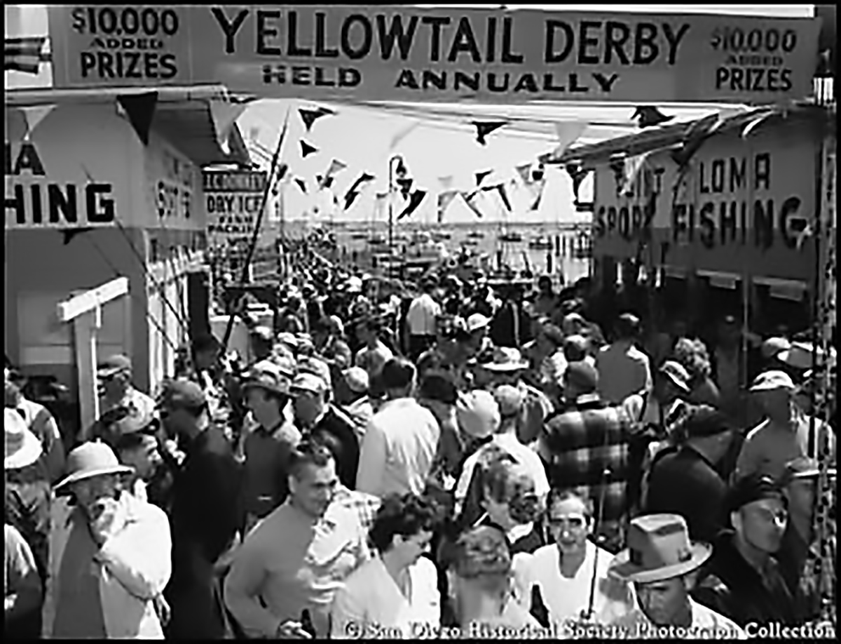 yellowtail derby