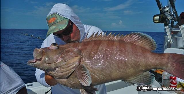 mystic grouper