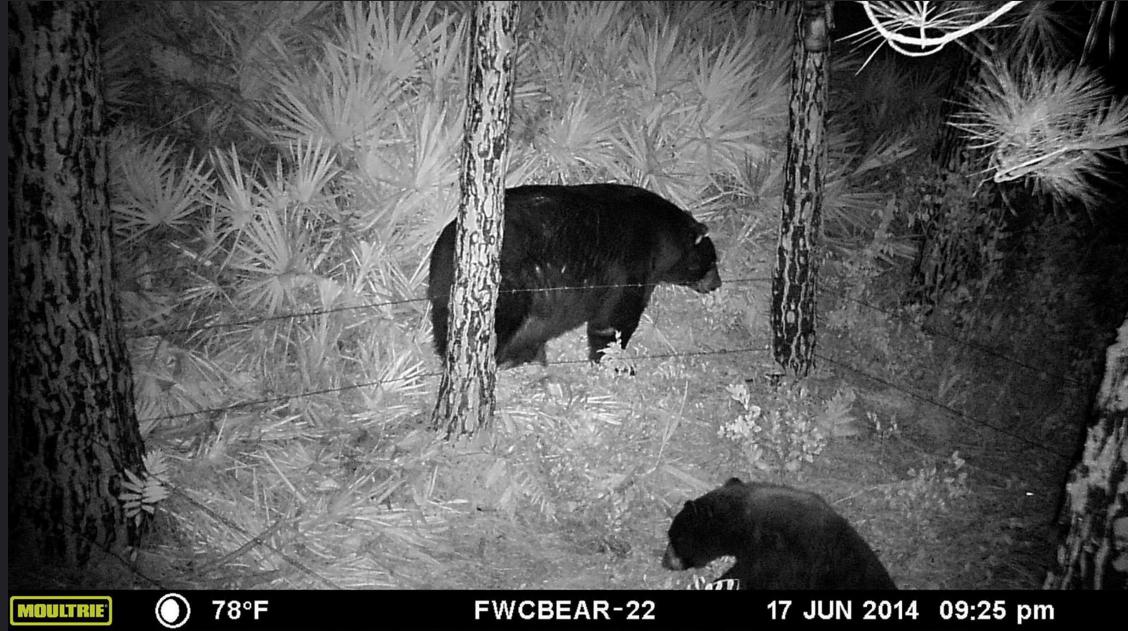 fwc bears