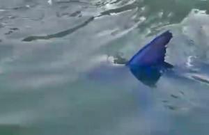 marlin marina