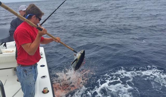 tuna season