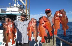fish report