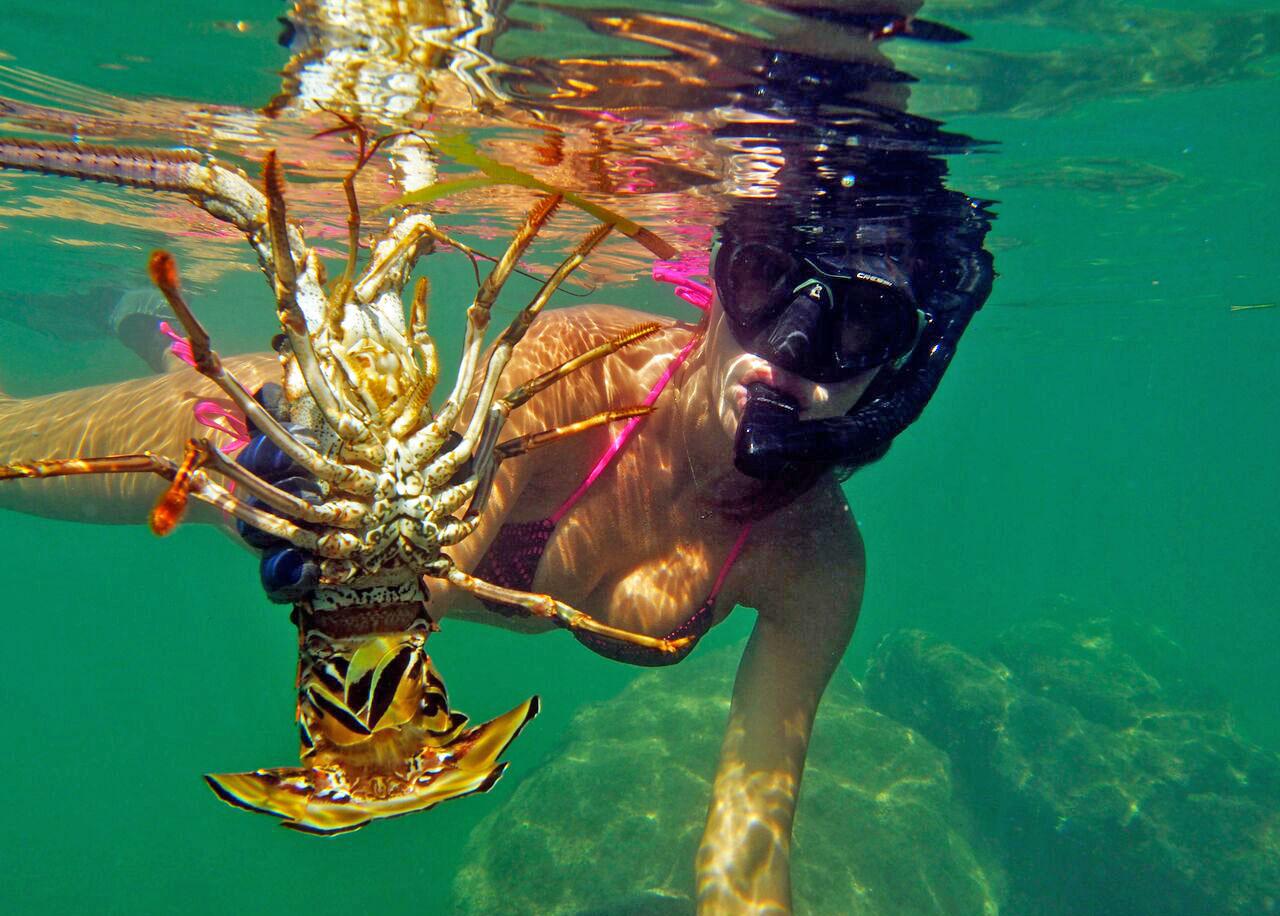 luiza barros lobster