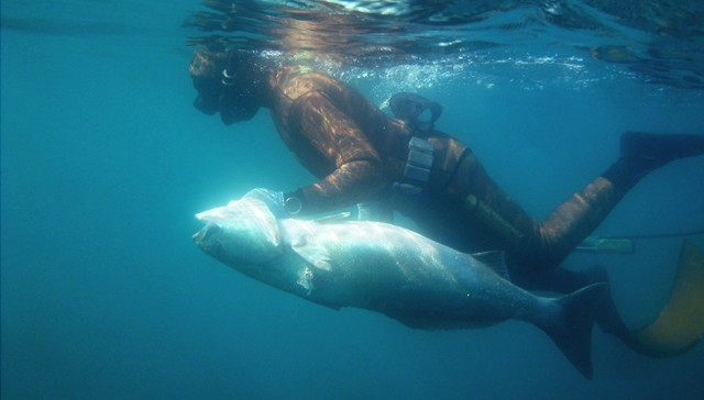 spearfishing california