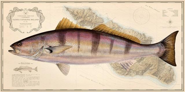 fish art