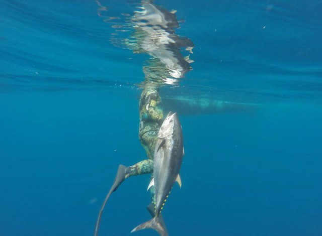 march bluefin - bluefin weekend