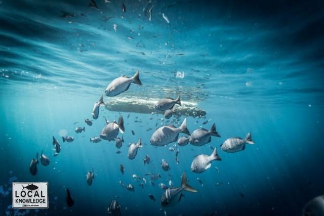 fishing offshore