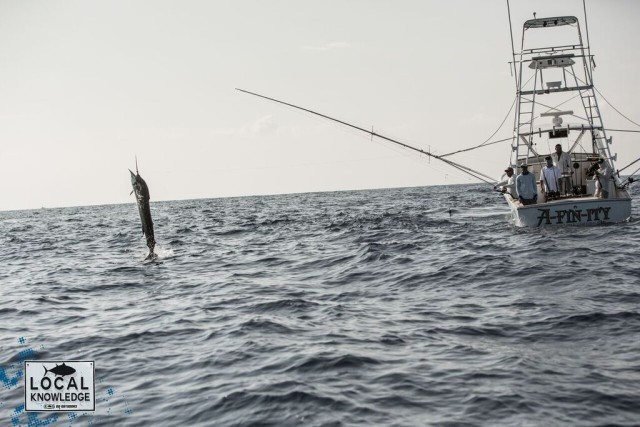 sportfish fleet