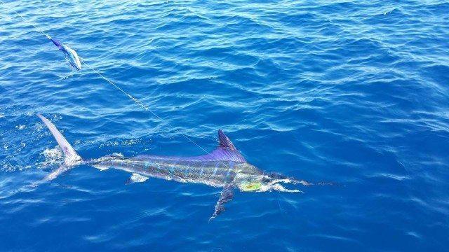 Scorpion fishing