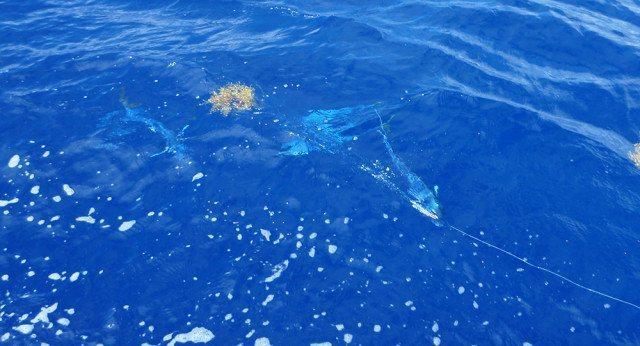 tuna trip