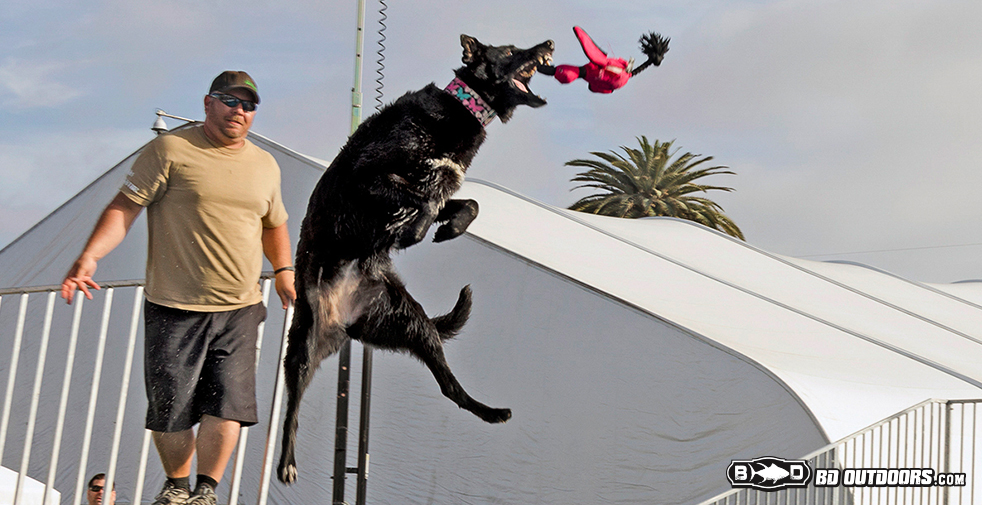 dogs fly
