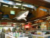 shimano longfin