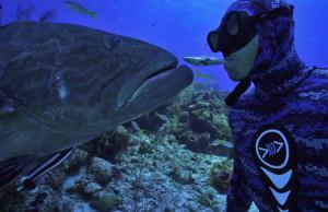 grouper video
