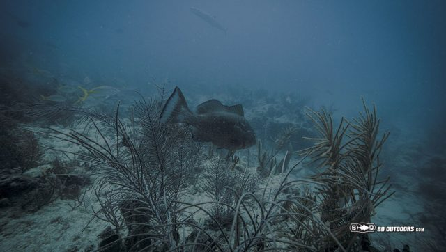 fishing closures - Florida Fishermen Unite
