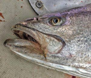 seabass fishing