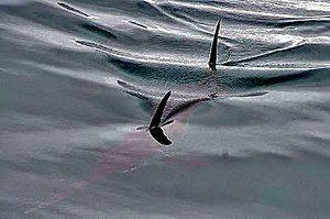 swordfish technique