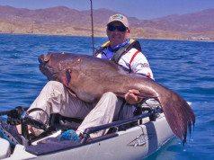 IGFA grouper