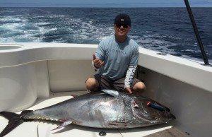 bluefin catch