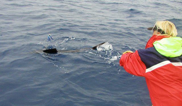 Cory Redwine billfish ladies