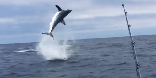mako shark footage
