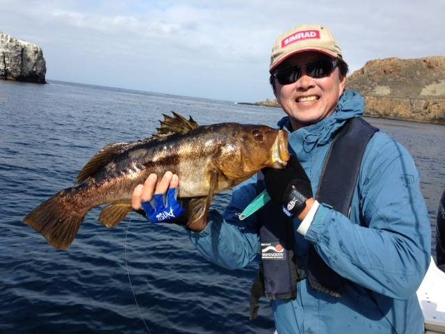 Big bluefin bite but yellows dominate counts bd outdoors for Davey locker fish count