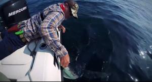 conway shark
