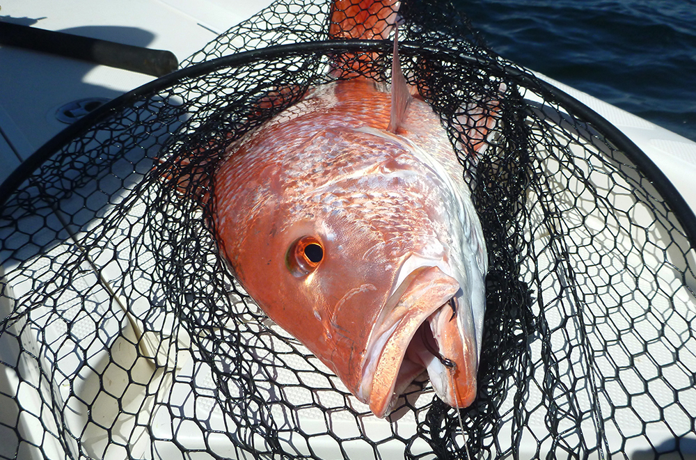 Atlantic red snapper changes called for by cca bd outdoors for Sjfc fish r net