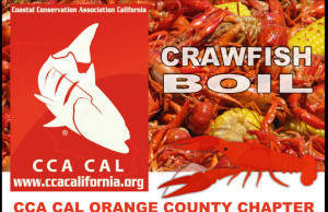 cca crawfish