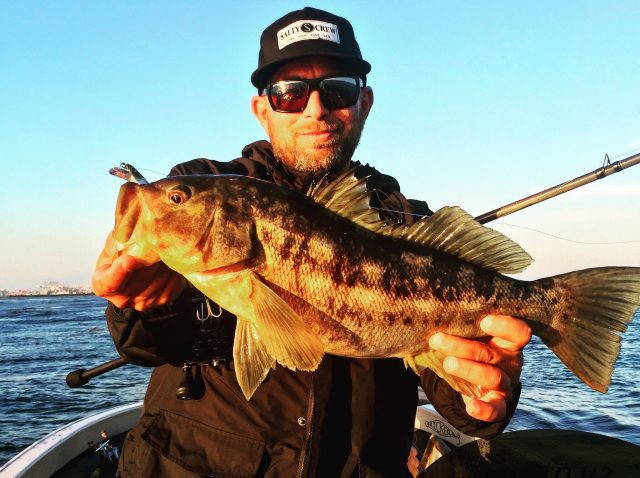 Fishing hard baits for calico bass bd outdoors for Calico bass fishing