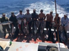 bluefin november