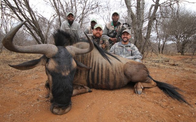 wildabeest hunt