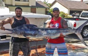 marlin catch