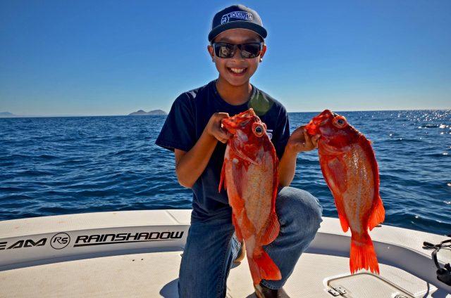 Rockfish captured
