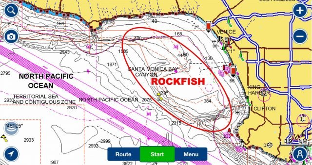 Rock fish on navionics
