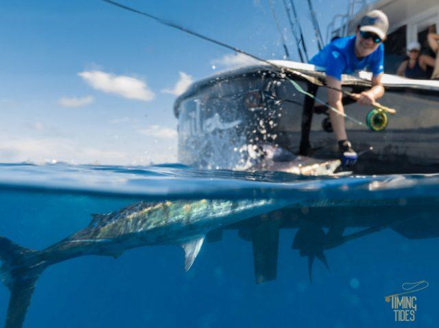 timing tides Blue Marlin