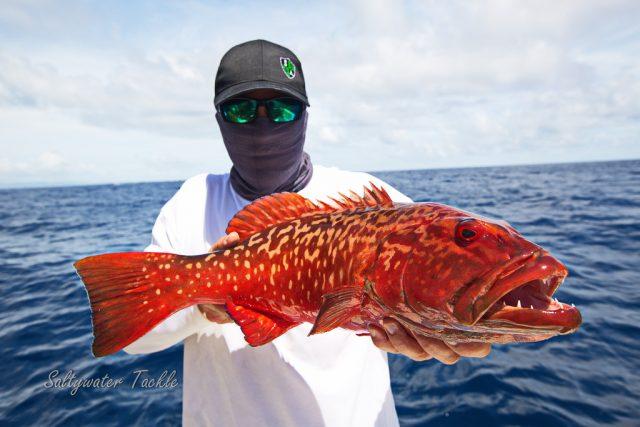 Fish Madagascar