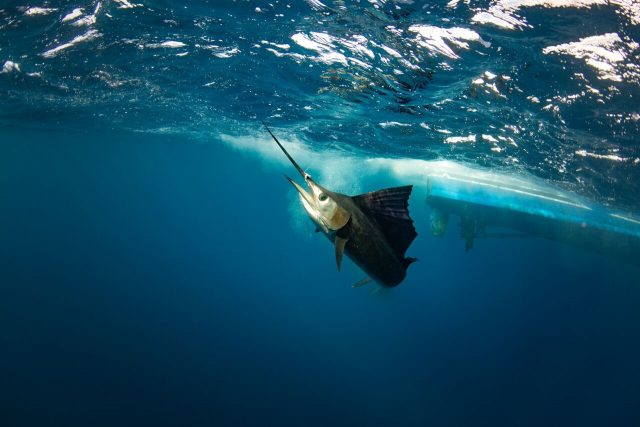 fishing leader